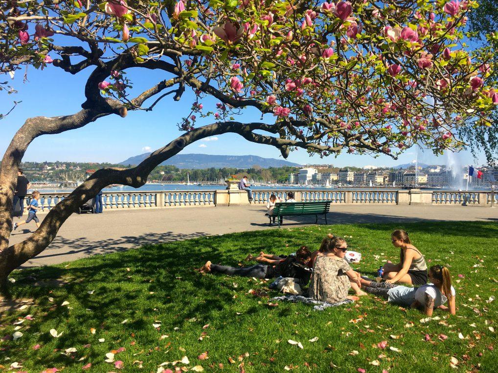 På Rive gauche, venstre bredd, ligger luksushotellene i Genève på rekke og rad. Heldigvis er det også plass til piknik i parken og bruktbutikker.