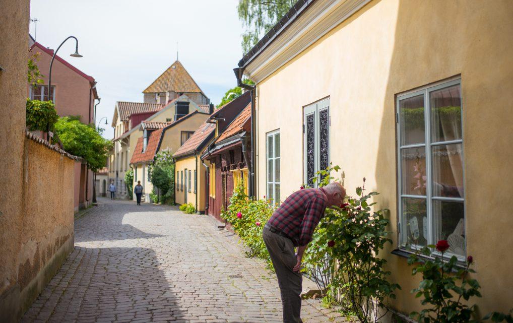 Smell the roses på Gotland