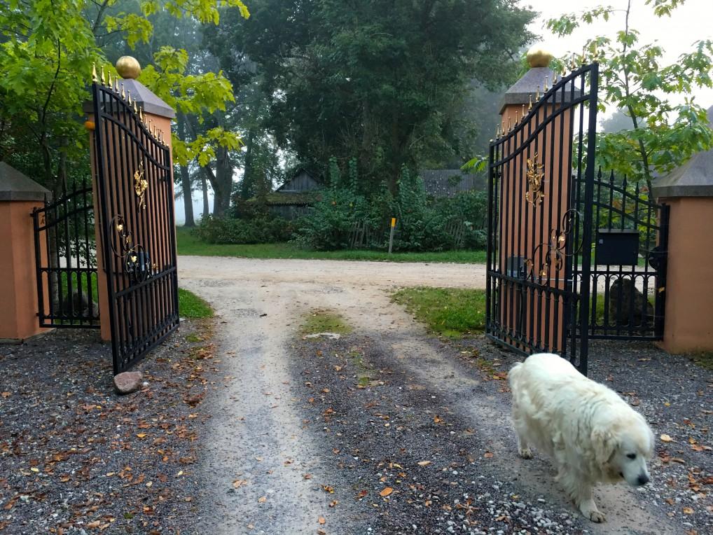 hund-port