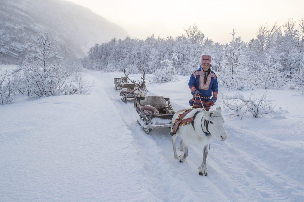 Sami Siida i Alta med reinsdyr og sledetur i vintersnø